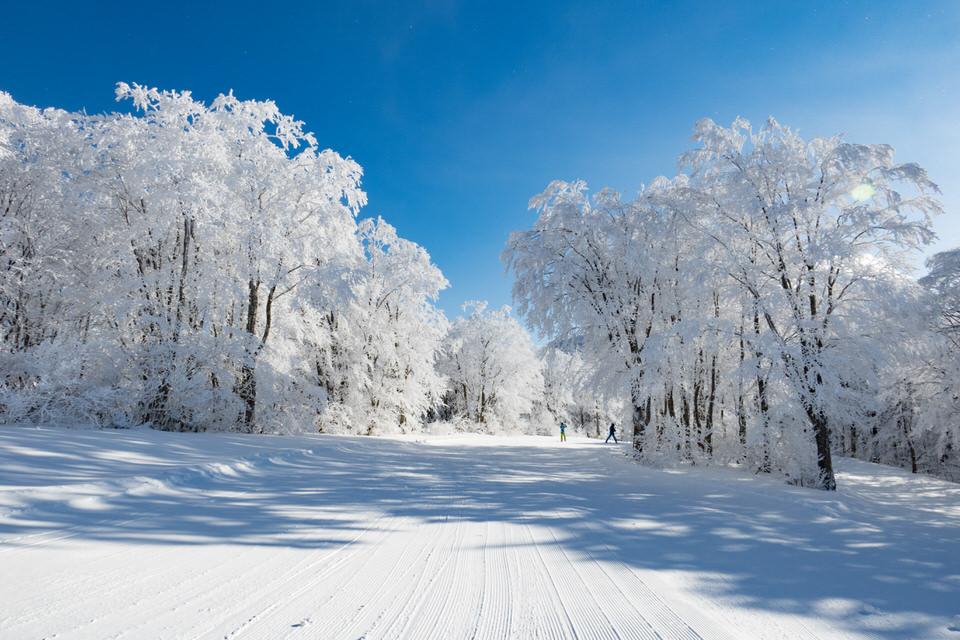 東北で初心者におすすめのスキー場